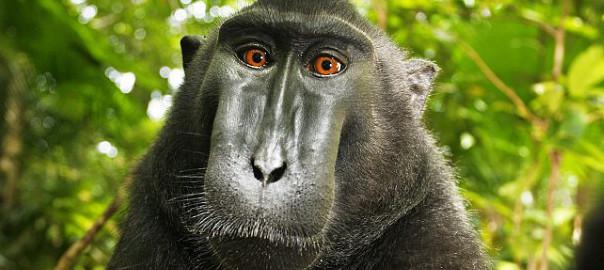 Monkey see, monkey sue